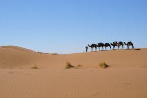 Cheminer dans le silence et la magie du désert marocain du 01 au 08 octobre 2017 @ désert marocain | Maroc