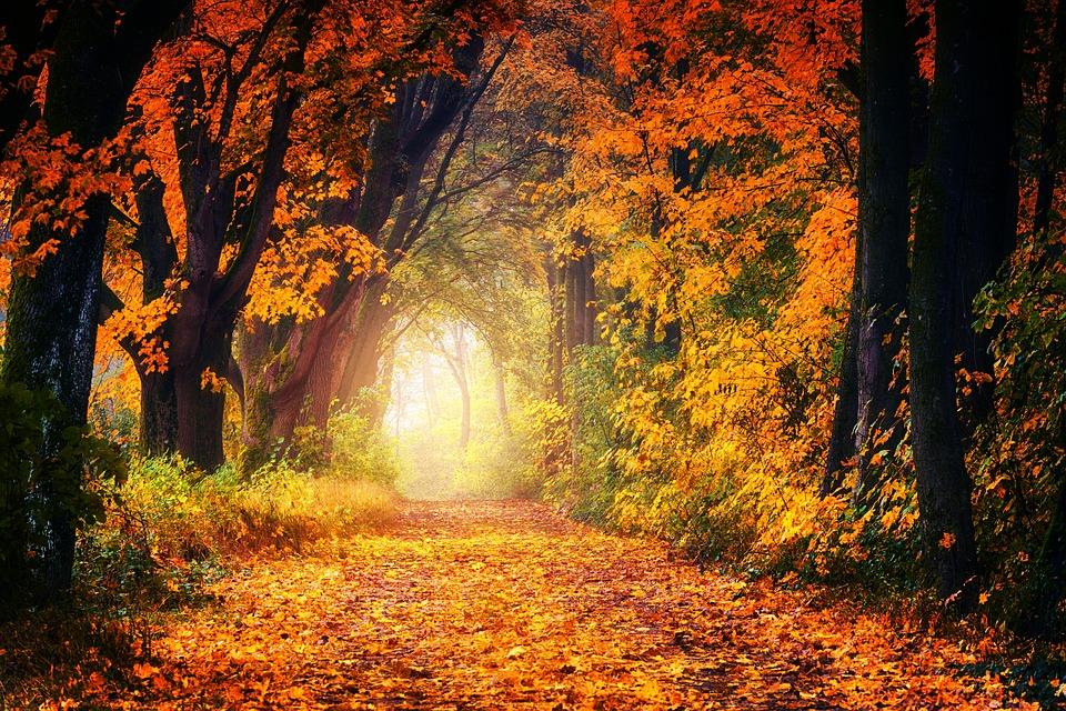 une retraite silence et méditation en automne avec touchand bien être
